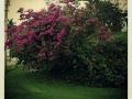 Primavera03